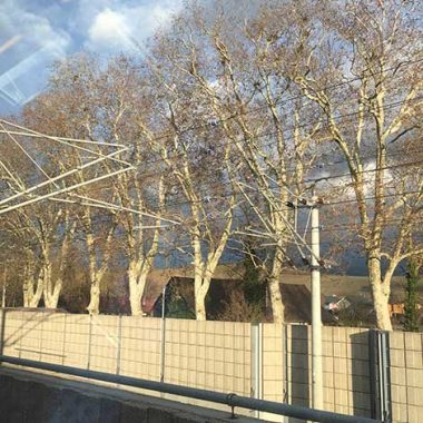 My Germany Journey - trees along the railroad track