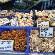 04-german-food-mushrooms-market-470-470